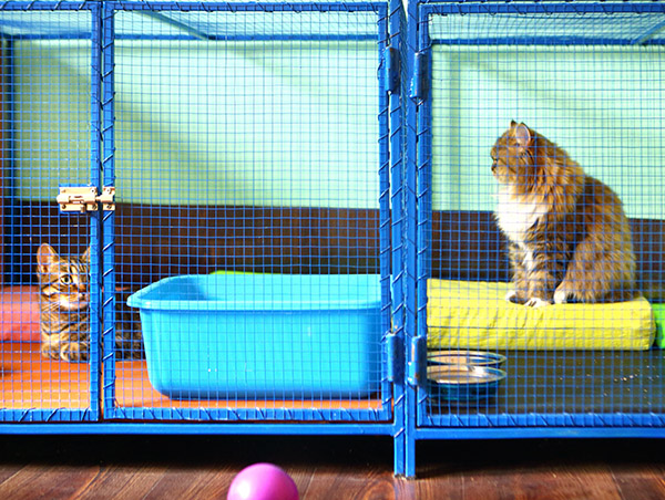 cats in kennel