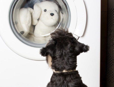 dog watching laundry