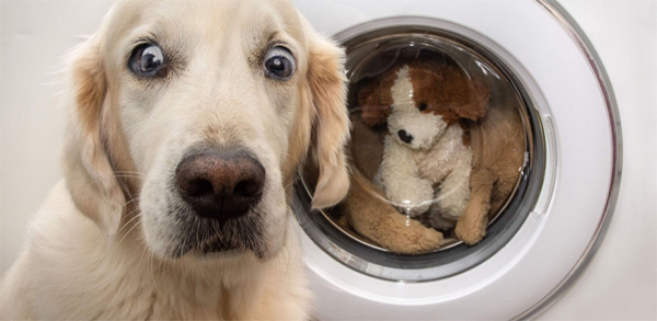 dog worried about toys in washer