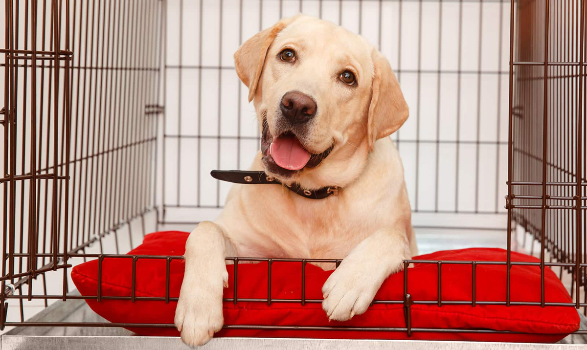 happy dog in clean crate