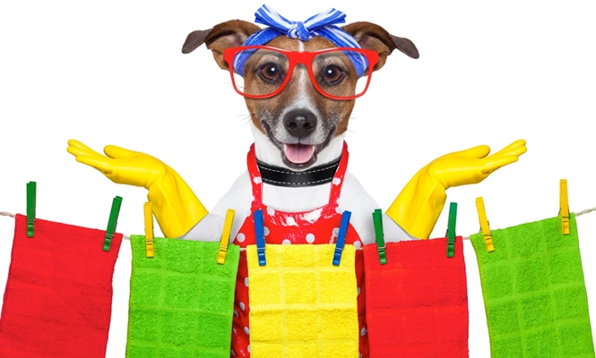 Pet Laundry and The Art of Creating A Beautiful Smelling Environment