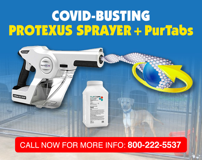Order Protexus now