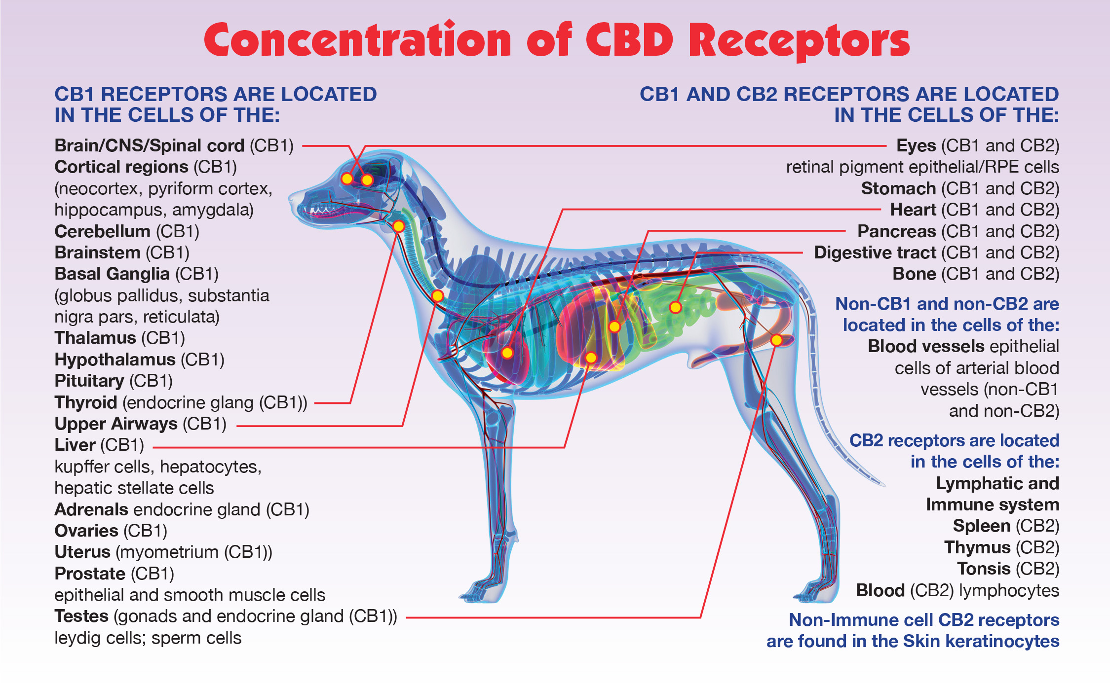 Concentration of CBD Receptors